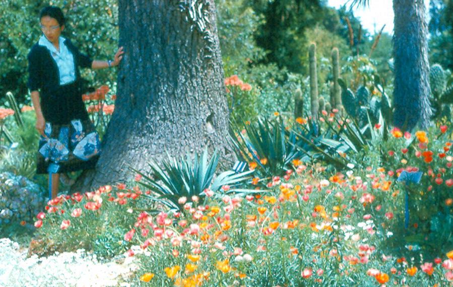 Box4 008 Mei Fradkin Stanford Cactus Garden 61